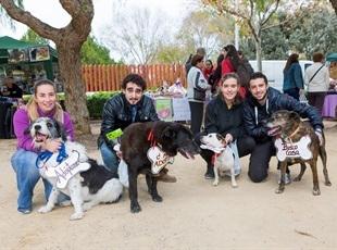 Feria Animales